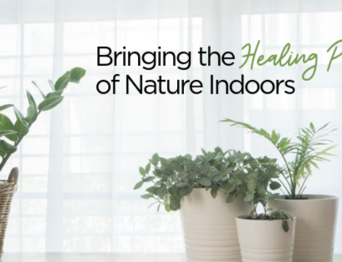 Bringing the Healing Power of Nature Indoors | Indoor Plants Scientifically Proven to Filter Toxins